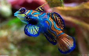 Colorful fish wallpaper #19248 - Open Walls