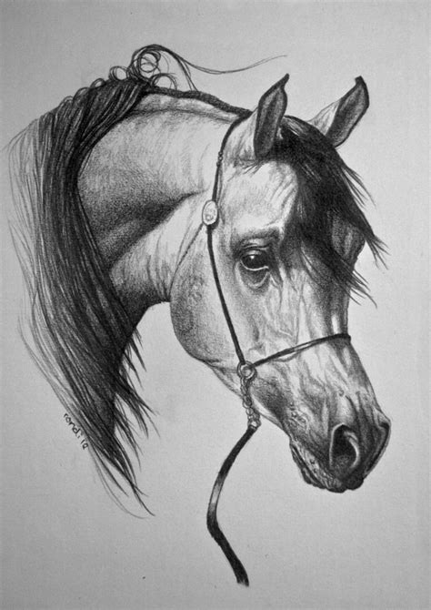 horse arabian deviantart drawings drawing horses pencil arab draw equine sketch most pony painting stallion animals artwork coloring pages paintings