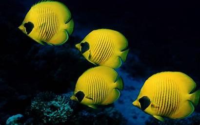Fish Ocean Marine Wallpapers Laut Ikan Animal