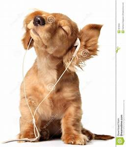 royalty free stock image grooving puppy image