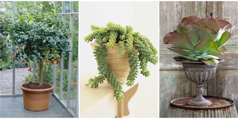 best indoor trees 100 good indoor plants best indoor best indoor growing tips youtube the best indoor plants for
