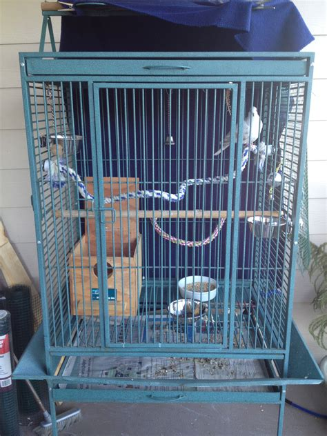 how to choose a cage for pigeons or doves