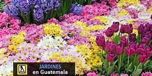 Mantenimiento de jardínes en Guatemala Directorio de Empresas de Guatemala