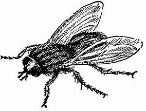 Fly 20clipart | Clipart Panda - Free Clipart Images