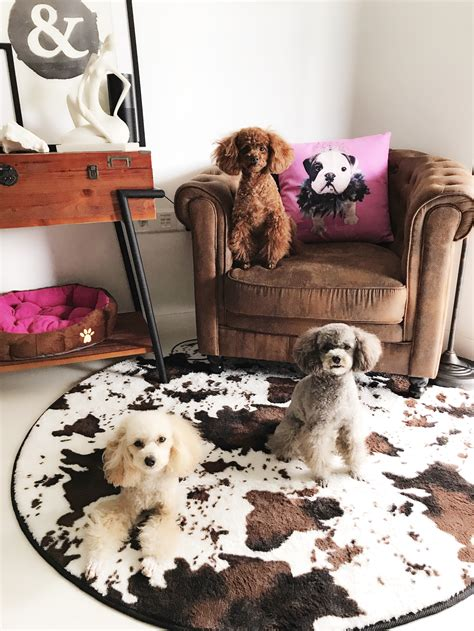 pin  joenie tan  japanese poodle style  images