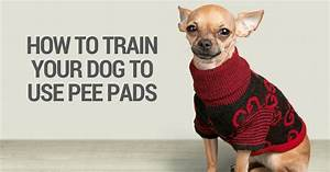 how to train your dog to use the bathroom outside 28 With train your dog to pee outside