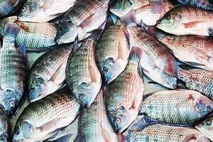 How Tilapia is a More Unhealthy Food Than Bacon | Eat This ...