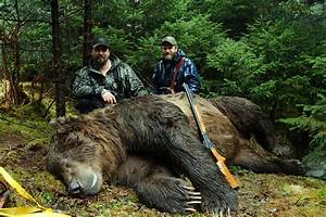 Teddy Bear Hund : the teddy bear hunt went well hunting ~ A.2002-acura-tl-radio.info Haus und Dekorationen