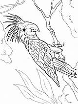Coloring Macaw Pages Birds Printable Getcolorings Colors Recommended sketch template