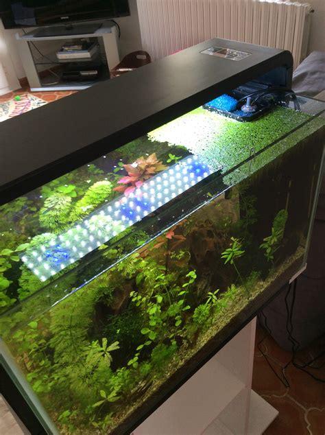 contenir les lentilles d eau dans un coin