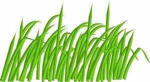 Green Grass Blade Clip Art at Clker.com - vector clip art ...