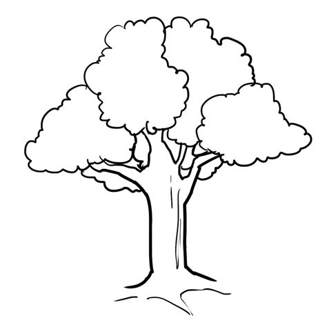 Tree Template Coloring Sheets by Tree 54 Nature Printable Coloring Pages