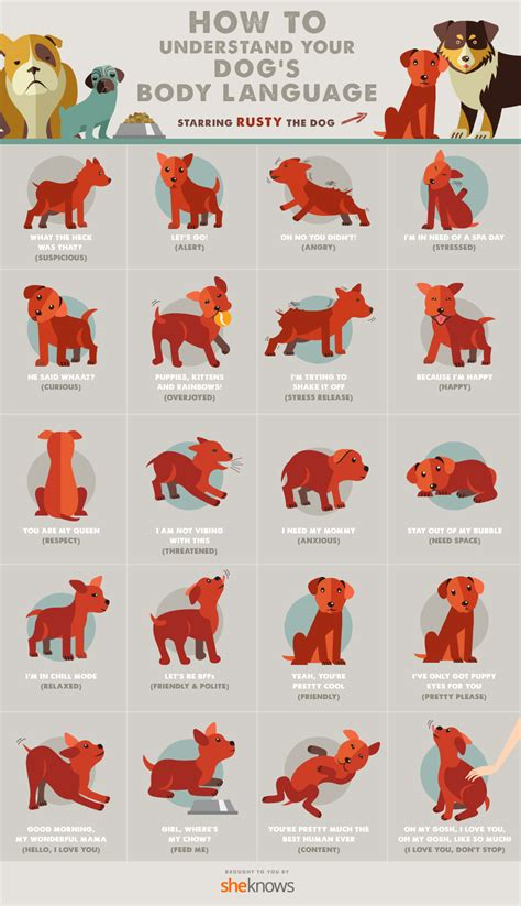 dogs body language finally explained infographic