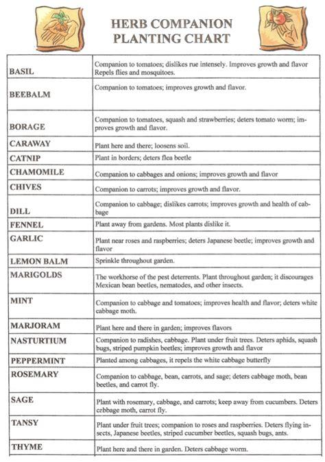vegetable companion planting chart pattysplants