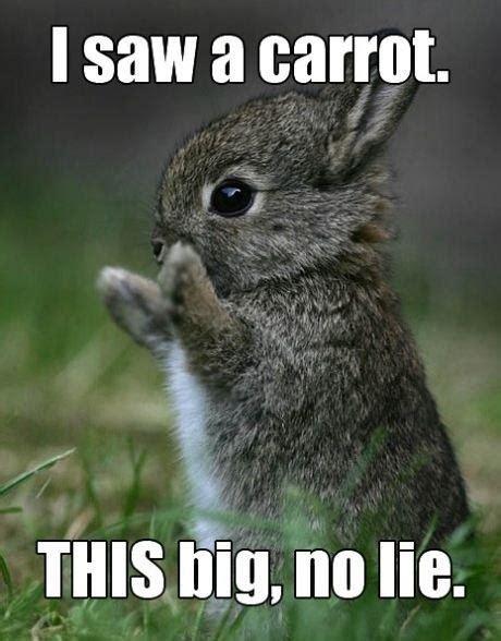 No Lie Meme - i saw a carrot this big no lie jokes memes pictures