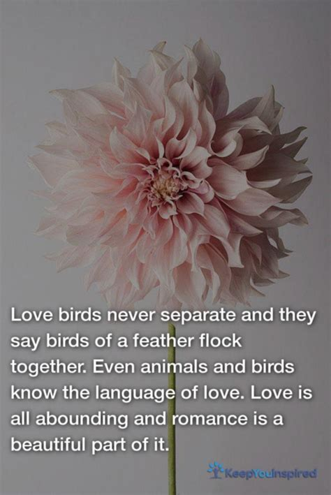 famous love  quotes  pictures