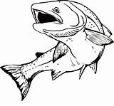 Coloring Mouth Trout Angry Fish Drawing Template Apache Salmon Open Tocolor Sketch Drawings Line sketch template
