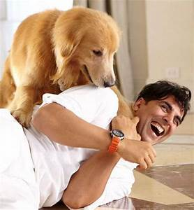 13 amazing Bollywood movies Dog Lovers need to watch!