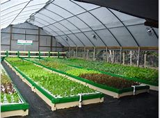 Aquaponics Fish Farming