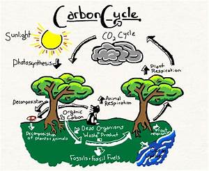 Carbon Cycle by Annanimus on DeviantArt