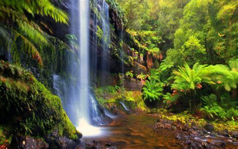 forest backgrounds cool - HD Desktop Wallpapers | 4k HD