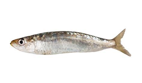 saltwater fishing basics info