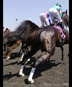 Beautiful Horse Zenyatta