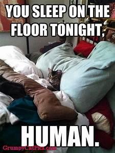 You sleep on the floor tonight human kitty cat kittens for Is it healthy to sleep on the floor