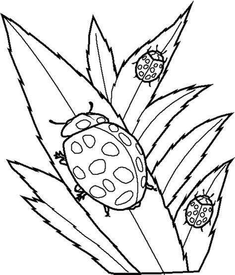 printable ladybug coloring pages  kids