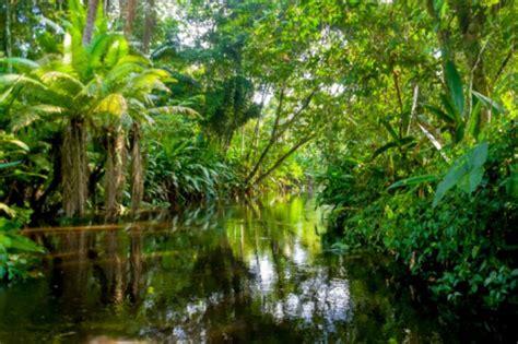 amazon jungle river peruvian latin america travel spots adventure rainforest forest calm