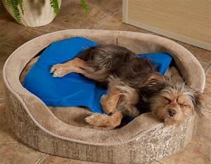 les meilleurs tapis rafraichissant pour chien en 2018 With tapis rafraîchissant chien