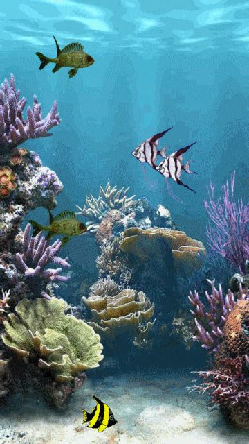 Animated Wallpaper Mobile9 - aquarium mobile screensavers 2777578 mobile9