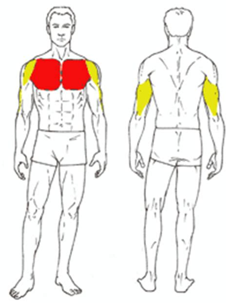 Pec Deck Flyes Target Muscles by Bench Press Gymjp