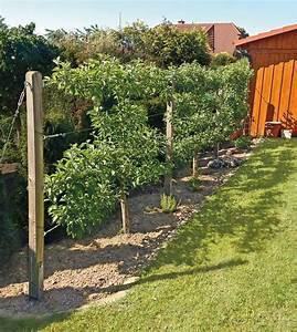Spalierobst Als Sichtschutz : pin von susanne heck auf ideen f r den garten pinterest garden back garden design und shade ~ Orissabook.com Haus und Dekorationen