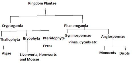 draw  mind map  plant kingdom biology