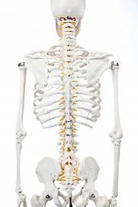 Full Skeleton Diagram