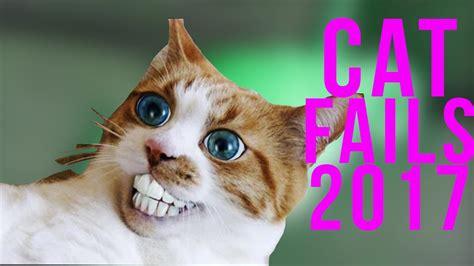 funny cat fails  cat fails compilation  failnation