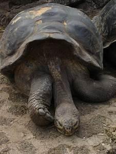 236 Best Endangered Species Images On Pinterest