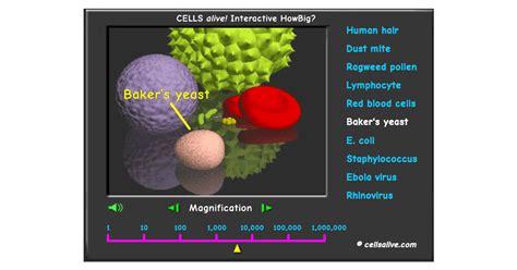 cells alive howbig