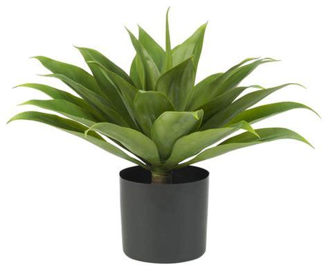 contemporary pot plants image gallery modern plants