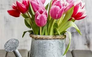 Was Sind Frühlingsblumen : fr hlingsblumen balkon den balkon durch fr hlingsblumen aufpeppen ~ Whattoseeinmadrid.com Haus und Dekorationen