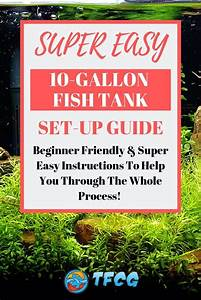 How To Set Up A 10 Gallon Fish Tank  Super Easy For