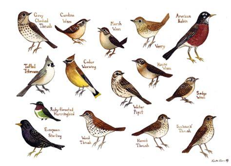 bird identification driverlayer search engine