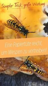 Wie Vertreibe Ich Wespen : wespen loswerden wie eine papiert te wespen vertreiben ~ Orissabook.com Haus und Dekorationen