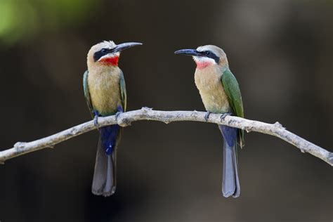 how do birds reproduce how do birds reproduce sciencing