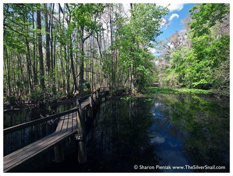 highlands hammock state park the silver snail sebring fl the ultimate american