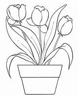 Coloring Flower Bouquet Tulips sketch template
