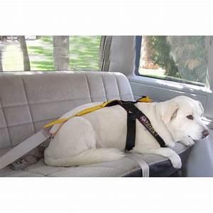 Harnais De Securite Pour Elagage : harnais de s curit sp cial voiture pour chien ~ Edinachiropracticcenter.com Idées de Décoration