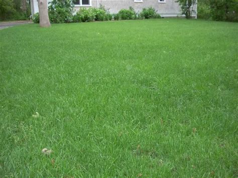 Turf Grass Tips Topsoil For A Perfect Lush Green Lawn Now