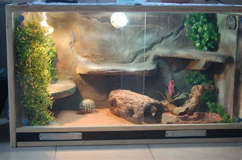 plante terrarium lezard